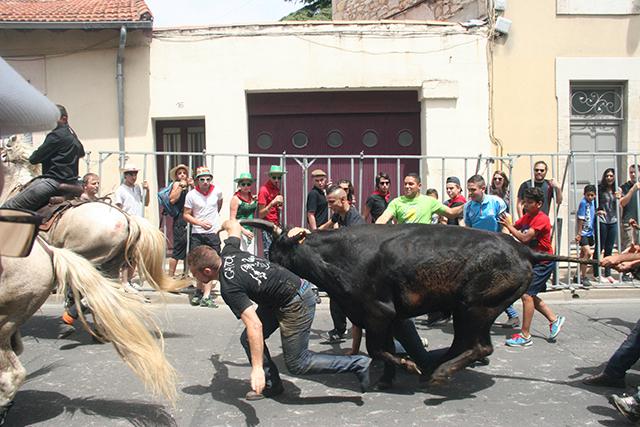 Une abrivado de la feria de Nîmes 2014
