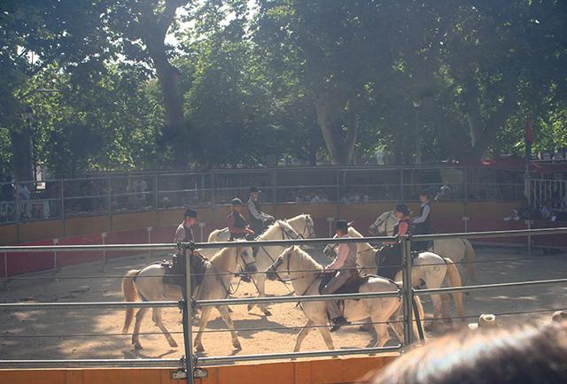 spectacle équestre de la feria de Nîmes 2014