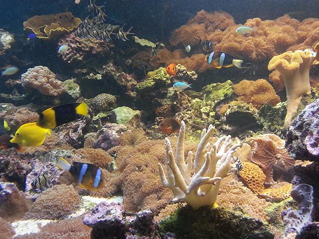 aquarium du Parc Phoenix à Nice