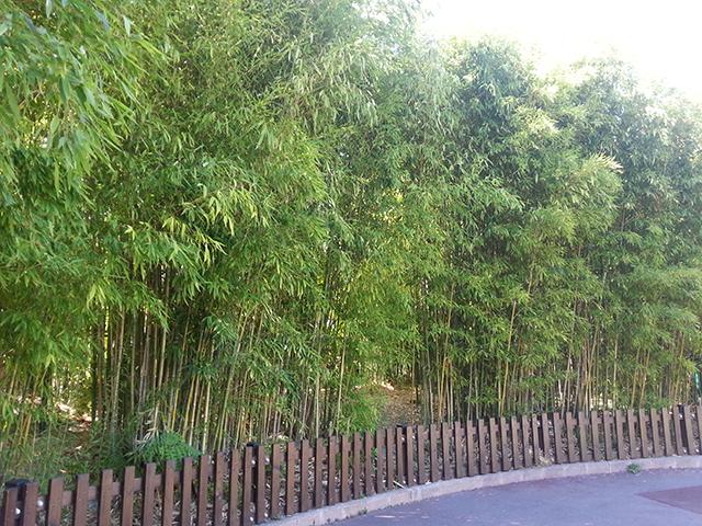 bambouseraie du Parc Phoenix à Nice