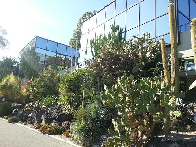 cactus du Parc Phoenix à Nice