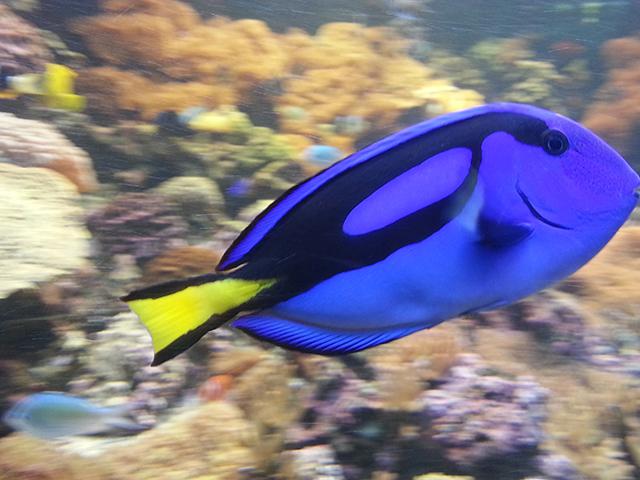 poisson du Parc Phoenix à Nice