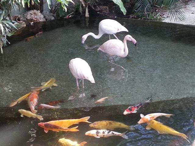 flamants rose du Parc Phoenix à Nice