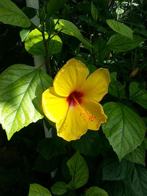 fleur colorée du Parc Phoenix à Nice