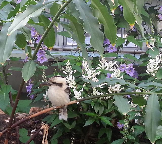 oiseau du Parc Phoenix à Nice