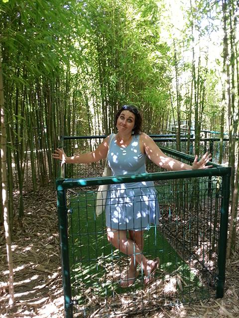 labyrinthe bambouseraie du Parc Phoenix à Nice