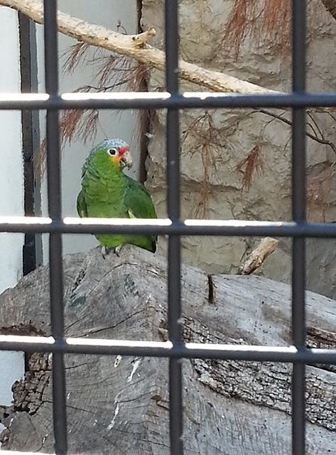 perroquet du Parc Phoenix à Nice