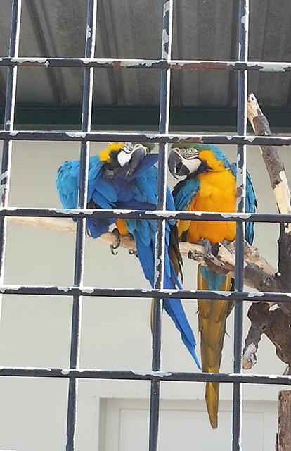 perroquets du Parc Phoenix à Nice
