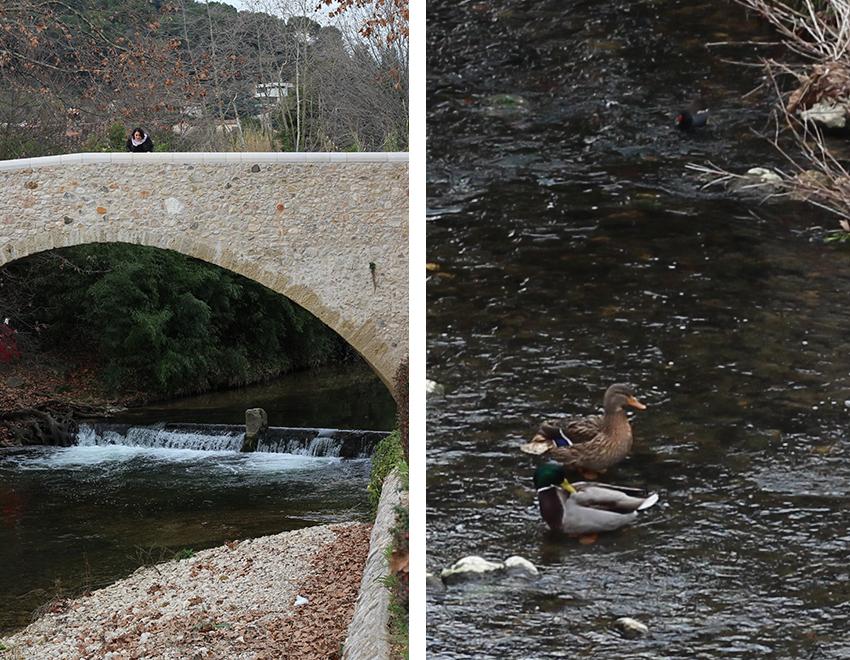 Look mode sur le vieux pont de Biot et ses canards.