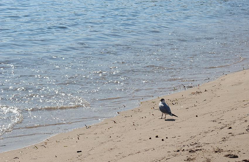 Une mouette et la mer.