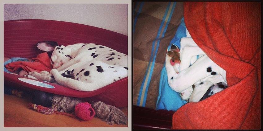Tranches de bonheur : domino dort.