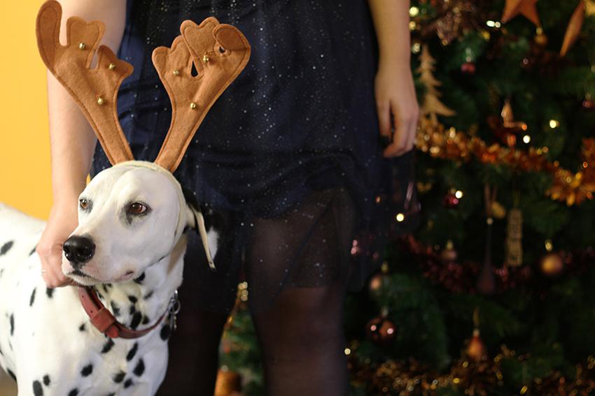 Domino, dalmatien renne de Noël.
