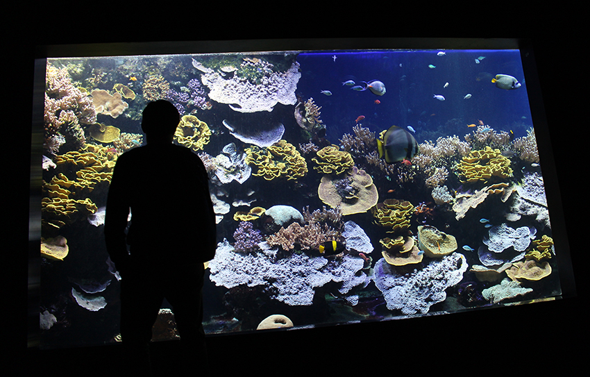 Visite du musée océanographique de Monaco, et ses aquariums.