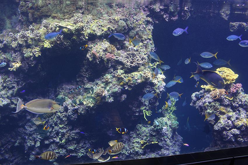 Aquarium du musée océanographique de Monaco.