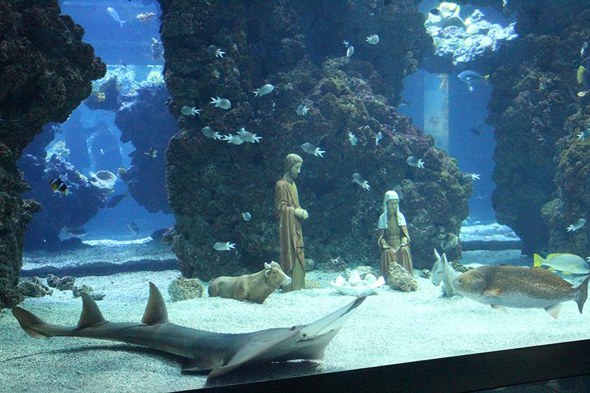 Crèche dans l'aquarium du musée océanographique de Monaco.
