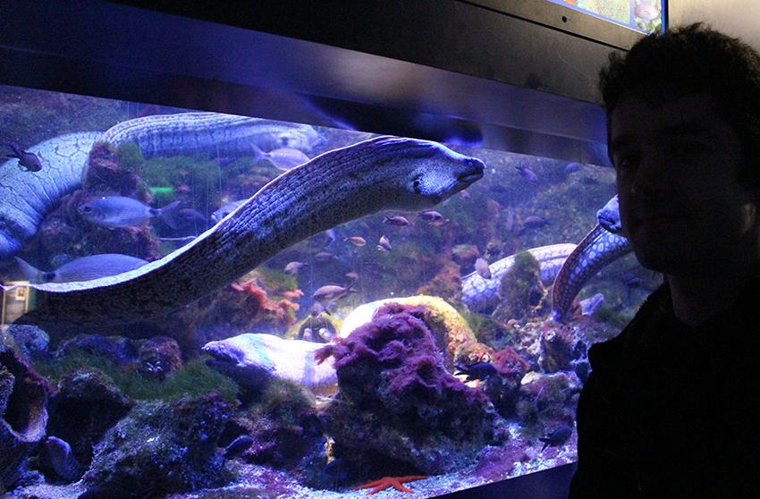 Aquarium des murènes, dans le musée océanographique de Monaco.