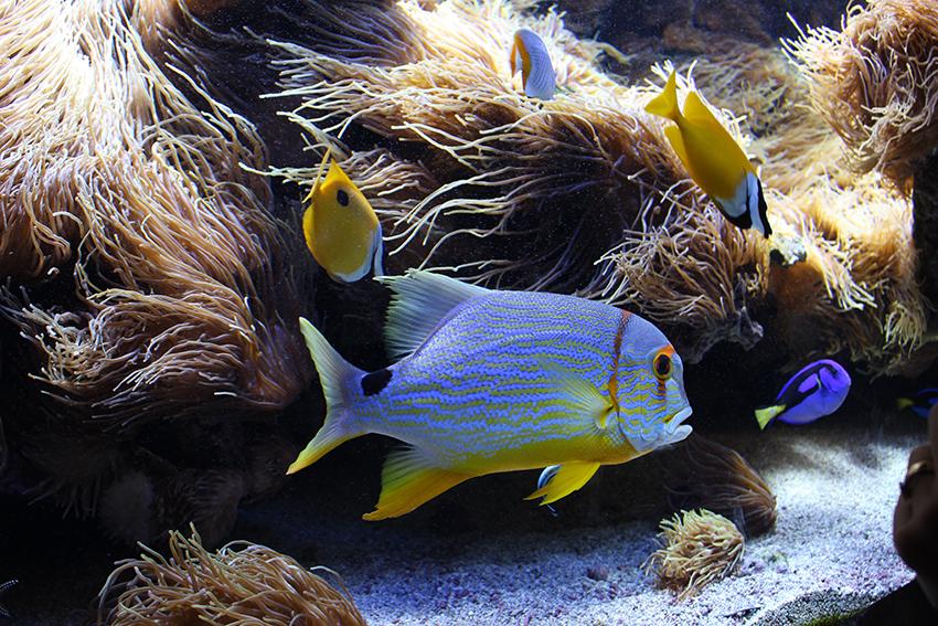 Poissons du musée océanographique de Monaco.