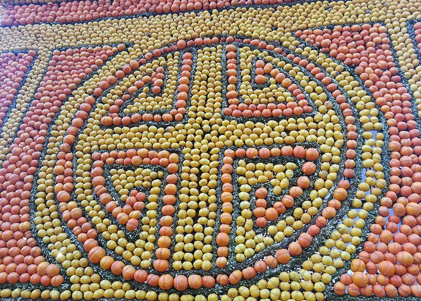 Parterre d'agrumes en motif chinois à la fête du citron de Menton.