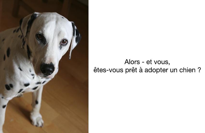Etes-vous prêt à adopter un chien ?