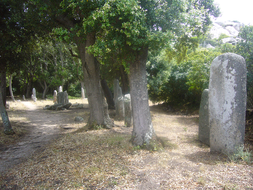 Forêt et menhirs de Renaghju, sur le plateau de Cauria, en Corse.