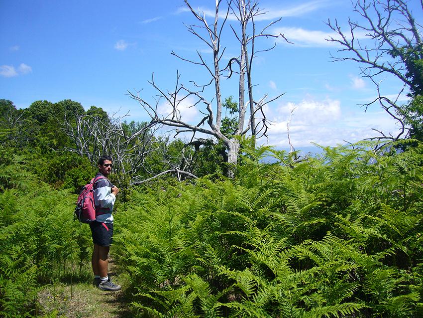 Randonnée à travers un champ de fougères sur le Monte Aragnascu, en Corse.