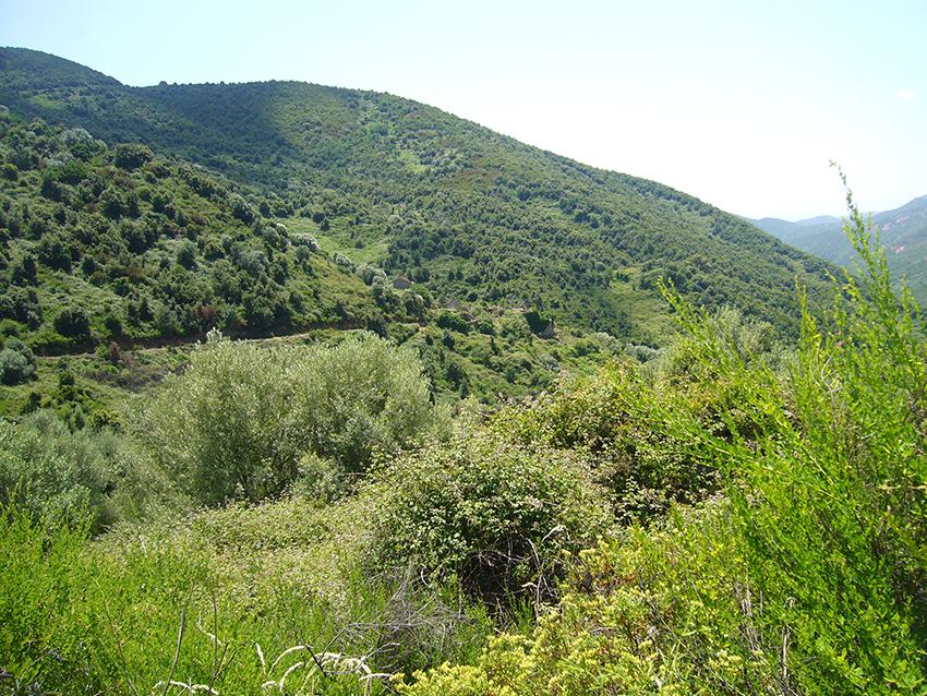 Randonnée nature en Corse, vers le village abandonné de Monticchi.