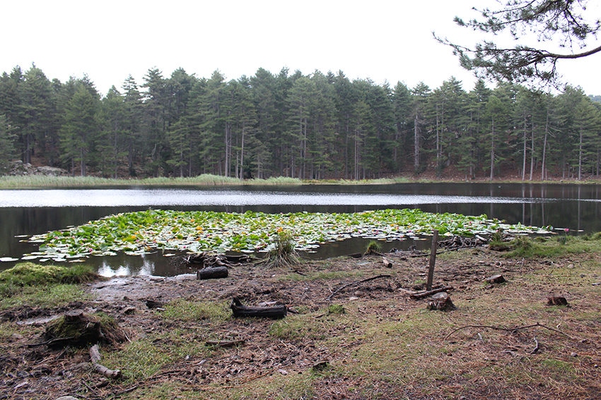 Lac de Creno et ses nénuphars.