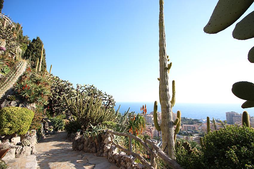 Découverte des cactus lors de notre visite du jardin exotique de Monaco.