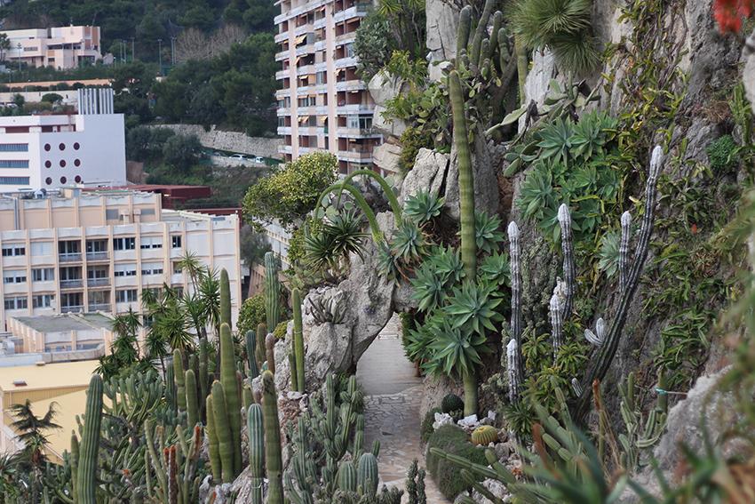 Visite du jardin exotique de Monaco.