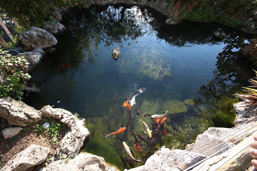 Bassin et carpes du jardin exotique de Monaco.