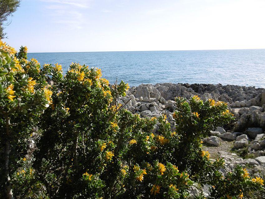 Sentier littoral de tire poil, tour du cap d'Antibes.