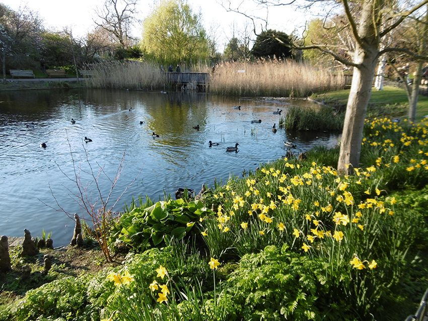 Etang du Queen Mary's Garden de Regent's Park à Londres.