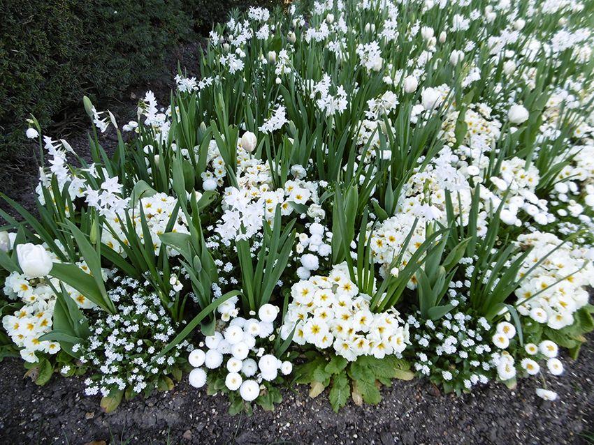 Parterre de fleurs dans le Queen Mary's Garden de Regent's Park à Londres.