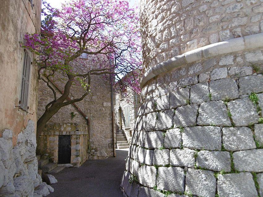 Ruelle fleurie de Gourdon avec arbre de judée et pied du château.