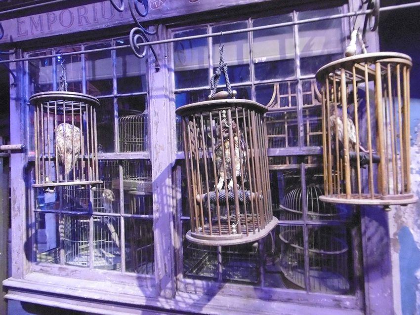 Magasin vente de chouettes au Studio Harry Potter de Londres.