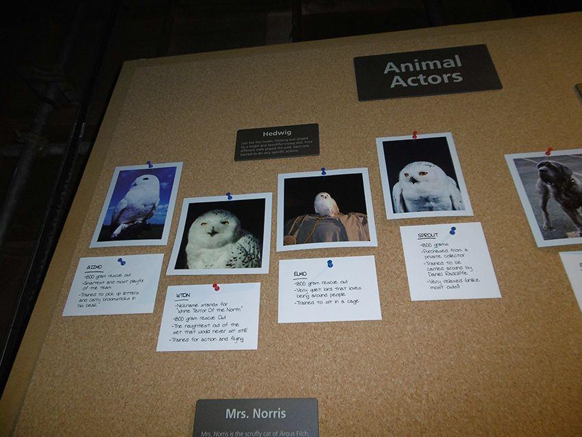 Les chouettes actrices d'Edwige au Studio Harry Potter de Londres.