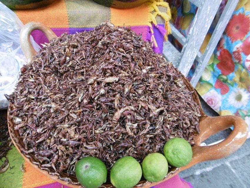 Chapulines, sauterelles grillées à Puebla au Mexique.