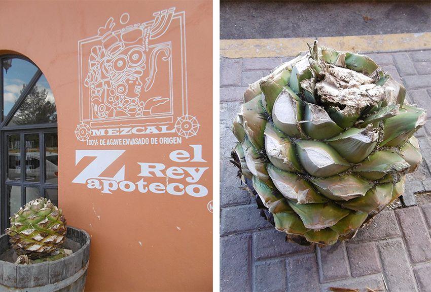 Cœur d'une agave permettant la fabrication du mezcal dans la fabrique el Rey Zapoteco au Mexique.
