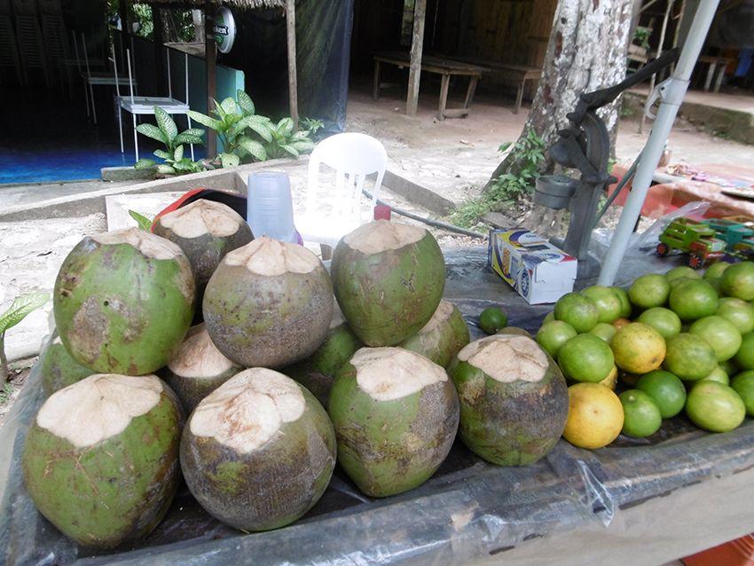 Noix de coco fraîche au Mexique.