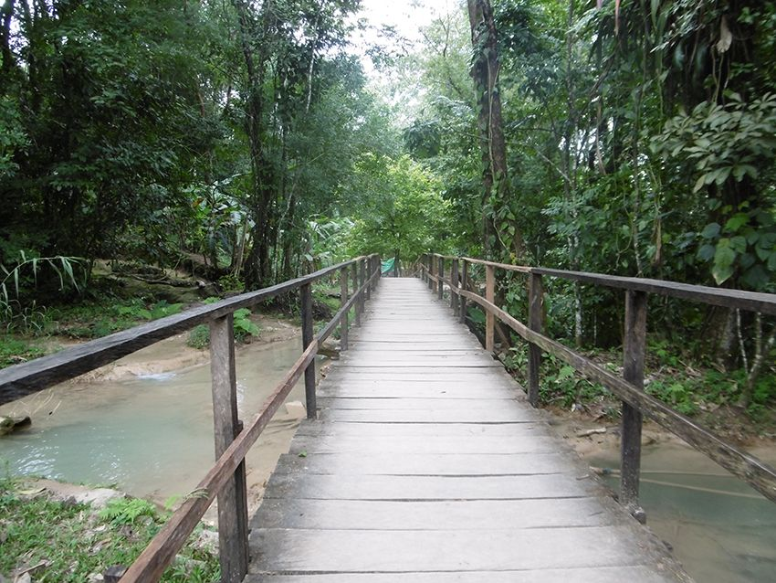 Pont au milieu de la jungle du Chiapas au Mexique.