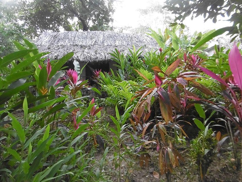 Végétation tropiacale dans la jungle du Chiapas au Mexique.
