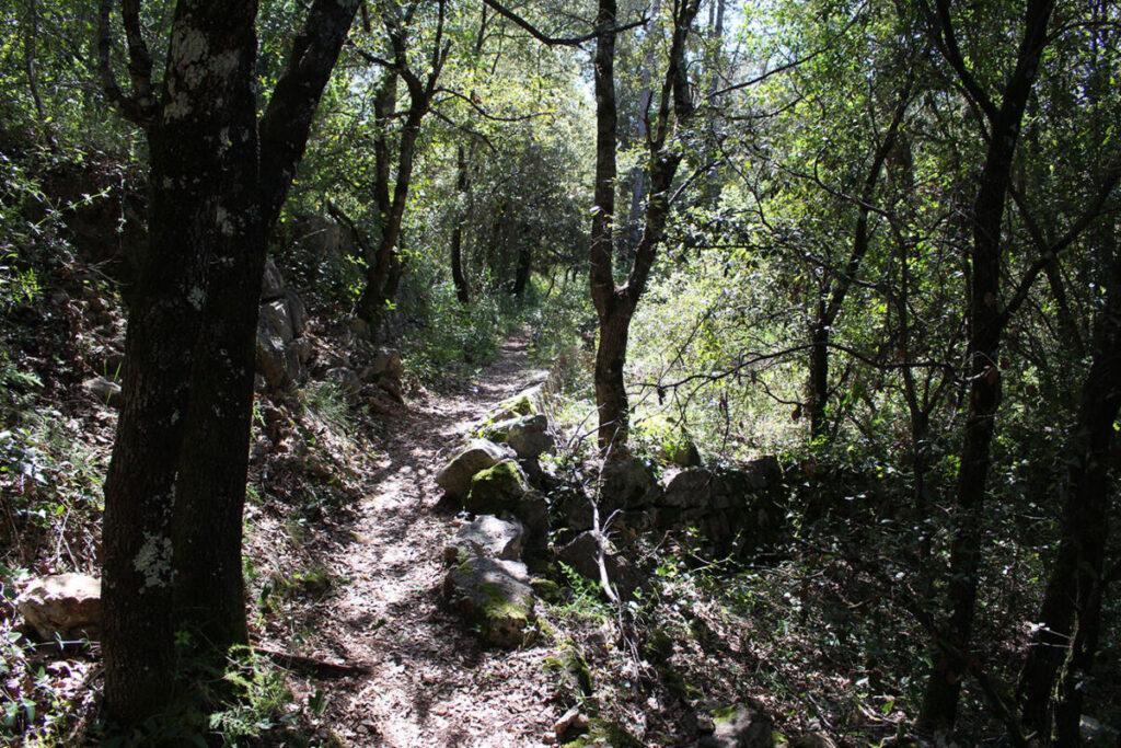 Randonnée dans la forêt de Saint-Cézaire sur Siagne.