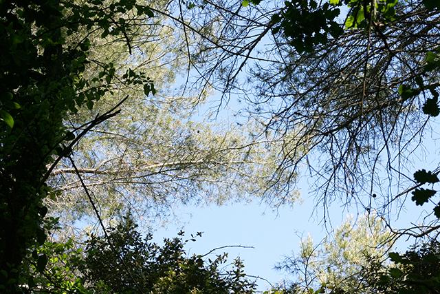 Atelier connaitre et reconnaitre les oiseaux, à l'étang de Fontmerle, à la Valmasque Mougins.