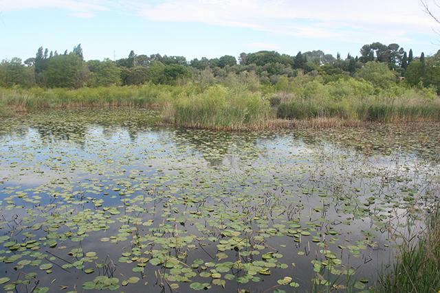 Atelier connaitre et reconnaitre les oiseaux, à l'étang de Fontmerle , à la Valmasque Mougins