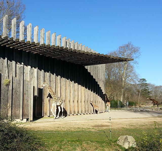 Visiter Lyon en 2 jours, les girafes du Parc de la Tête d'or