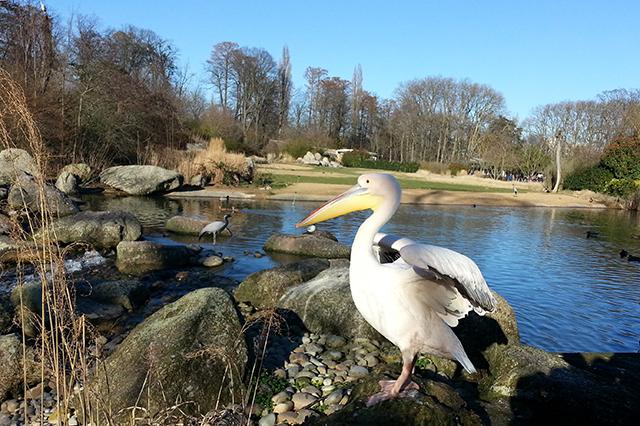Visiter Lyon en 2 jours, les oiseaux du Parc de la Tête d'or